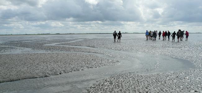 Wattführung im Wattenmeer
